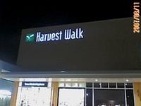 20070811_harvestwalk1_2